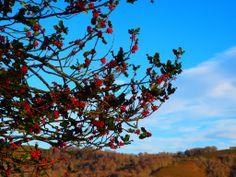 Contrastes otoñales. En la ruta del Monte Rio Los Vados, #Ucieda, Parque Natural Saja Besaya #Cantabria.