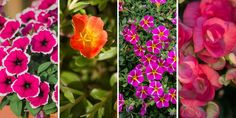 🌷🌺🌸🌻 Επιλέγουμε τα πιο όμορφα λουλούδια για να διακοσμήσουμε με υπέροχες κρεμαστές γλάστρες το σπίτι μας. Πανέμορφα φυτά που κρέμονται σε μπαλκόνια και αυλές και μοναδικά φυτά εσωτερικού χώρου να στολίζουν με το φύλλωμα τους ράφια και τοίχους μέσα στο σπίτι, γεμίζοντας μας με χαρά και αισιοδοξία.