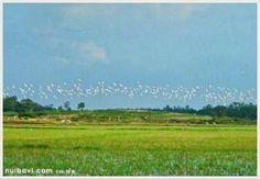 Những điểm du lịch sinh thái gần Hà Nội : Khám phá Rừng cò Ngọc Nhị ở Ba Vì