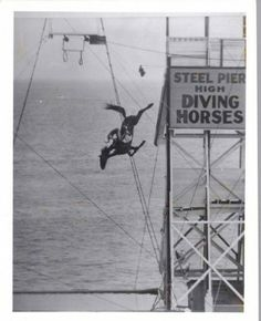 Diving Horses; Atlantic City, Steel Pier