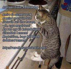 Aranyosi Ervin: Kalandvág Literature, Poems, Album, Humor, Animals, Literatura, Humour, Animaux, Poetry