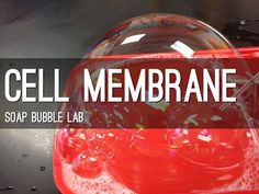 Cell Membrane Bubble