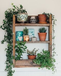 Our founding member @lobsterandswan has the most amazing green plant collection! Jeska created this chunky kitchen shelf for her tea herbs and plants. If you would like to take part in our April DIY challengethen please hurry! You've got until the 28th April to take part. Share on atmine.com or here on Instagram on our #StyleAtMine hash tag. by atmine