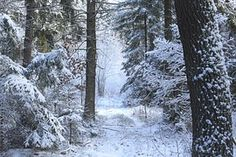 Snow, Árbol, Madera, Al Aire Libre