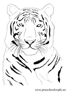 beatiful-tiger-coloring-pages-for-preschool.jpg (1005×1373)