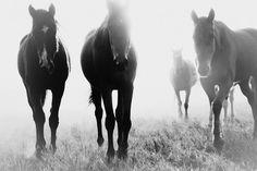 Pampa Horse #5
