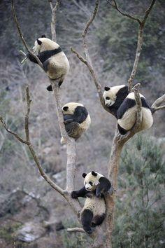 Wolong Nature Reserve, Sichuan, China