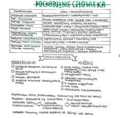Back To School, High School, Good Notes, Study Notes, Study Motivation, Self Improvement, Studying, Handwriting, Psychology
