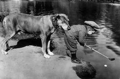 A dog holds onto a little boy as he tries to retrieve a ball in a river with his golf club, 1920s