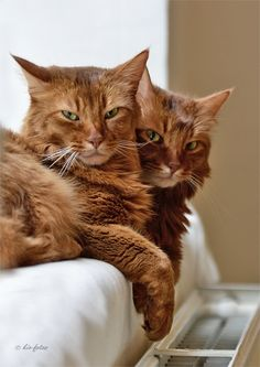 No and Nope, the gorgeous Ginger twins. Jumeaux <3