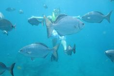 Pompano Beach, Florida Snorkel and Glass Bottom Boat Trip near Pompano Beach, Florida | WaterplayUSA