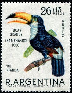 Ramphastos Toco- Toucan Grande, Argentine Republic 1967