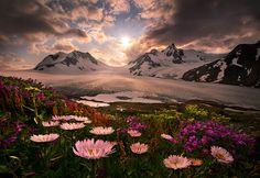 Spring - Wildflowers of Alaska