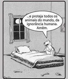 BOA NOITE! <3 :) #petmeupet #cachorro #gato #amoanimais