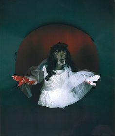 William Wegman | william wegman lucia de lammemoor william wegman polaroid rendition of ...