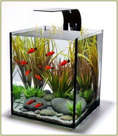 The aquarium is likely one of the decorations to embellish the appropriate home. With an aquarium able to presenting pure nuances into the home. The home is extra stunning and enticing. For present aquarium fashions, Aquarium Lamp, Mini Aquarium, Home Aquarium, Nature Aquarium, Aquarium Design, Aquarium Ideas, Klein Aquarium, Small Fish Tanks, Fish Tank Design