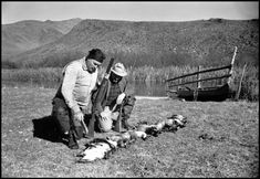 Robert Capa: USA. Sun Valley, Idaho. 1940. Ernest HEMINGWAY with the day's catch during a duck hunt on John Meyer's farm.