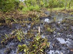 Judge Rules Chevron Will Not Have To Pay Billions For Environmental Destruction