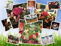 Va punem la dispozitie aranjamente florale Constanta pentru mesele invitatilor si masa de prezidiu in judetul Constanta– 0762649069 Polaroid Film