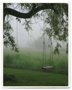 swings...oh how I whish we had a tree that could hold a swing like this!