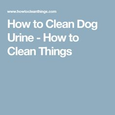 How to Clean Dog Urine - How to Clean Things