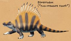Weird Backs Month #08 – DimetrodonNamed for the different-sized teeth in its jaws, the sphenacodontid Dimetrodon is by far the most famous of the synapsids, and is all too frequently mistaken for a dinosaur. Living during the Early Permian (~295-272 mya), at least 13 different species have been identified – mostly from the southwestern USA, as well as one from Canada and another from Germany. The smallest, D. teutonis, was only 60cm long (2′), while the largest, D. angelensis, re...