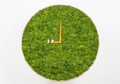 Dutch design studio noktuku, have designed the Moss Clock. The designer's description The noktuku moss clock contains the tops of real reindeer moss from Norway which have been meticulously selecte...