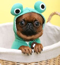 Dress your pet up in a funny costume :)