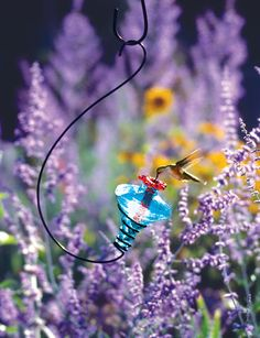 I would so love to have a hummingbird garden one day!