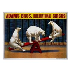 Vintage Circus Poster of Polar Bears