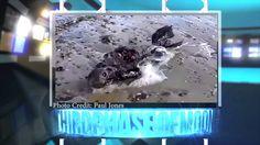 WHOA!!! UFO Sightings Alien Mermaid Creature Washes Ashore UK!!?