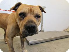 Kennel 28 - located at Corona Animal Shelter in Corona, California - 6 year old Male Pit Bull Terrier Mix