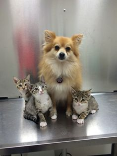 猫と犬の仲良し画像 24 ねこLatte+