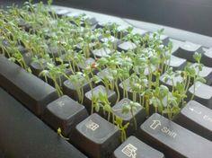 Piensa Verde, re-utiliza #SoyVorago