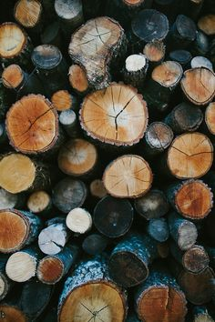 I love the natural texture of these logs. Together the logs create a rustic and unified message.