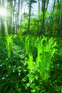 Ramsholmen forest park area in Raseborg, Finland