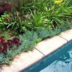 Ideas Backyard Pool Decor Plants For 2019