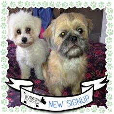 Pepper and Lexy are #NewDoggySignUps. They're both bundles of fun and like lots of attention!