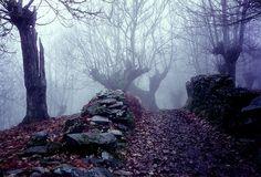Bosque castaños - O Courel