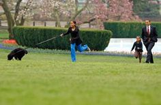 The Obama Family acquired a new dog in August 2013, see photos of Sunny and Bo: Barack Obama and His Daughters, Sasha and Malia