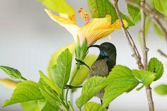 Seychelles, colibri, bird, island, nature