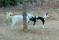 Juegos en el parque canino 05/16