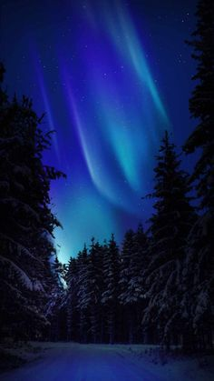 Northern Lights Snow Night - IPhone Wallpapers
