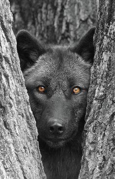 Un cane : fascino grazia dolcezza fedeltà amore...