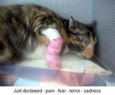 Make it illegal to declaw cats in Canada!   YouSignAnimals.org
