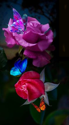 Beautiful Butterflies, Beautiful Roses, Beautiful Flowers, Amazing Dp, Over The Garden Wall, Wedding Background, Love Rose, Landscape Pictures, Flower Art