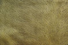STRIE VELVET Fabric by KOKET  | KOKET Textiles #textiles #fabrics #wallcoverings #leathers  see more: http://www.bykoket.com/textiles/fabrics/hide-velvet-kiwi-fabric.php