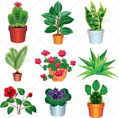 Home Plants Vector Set  #GraphicRiver         beautiful home plants photo realistic vector set  	 Zip file includes: - eps10, editable vector, RGB - jpg, 5670×5640 px, RGB - psd, RGB     Created: 27August13 GraphicsFilesIncluded: PhotoshopPSD #JPGImage #VectorEPS Layered: Yes MinimumAdobeCSVersion: CS Tags: aloe #cactus #design #drawing #eps10 #ficus #flora #floral #flower #geranium #grass #home #icon #illustration #isolated #nature #object #palmtreehome #plant #pot #sansevieriaflower #set…
