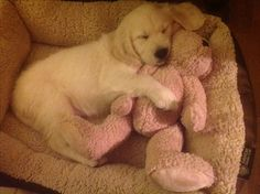 Max' 1st night (53 days old) with us his new family and Teddy...a very exhausting day for this little fella...<3