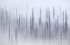 "Strolling Through Czech Republic's Gorgeous ""Cloud Forest"" - My Modern Metropolis"